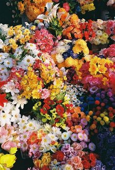 Colourful blooms and flowers.
