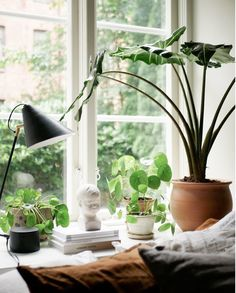 my scandinavian home: 11 Small Space Tricks to Learn From a Swedish Interior Designer's Home - windowsill full of plants Swedish Interior Design, Swedish Interiors, Swedish Decor, Small Space Interior Design, Dream House Interior, Living Room Interior, Window Sill Decor, Wall Mounted Table, Photos Originales