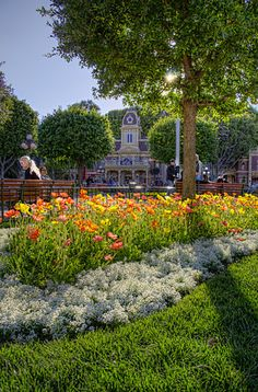 The Bloom Near City Hall Ahh, Spring at Disneyland. Does it get much better than this? I submit that it does not! All the trees are bloomin. Disneyland Main Street, Disneyland Photos, Disneyland Trip, Disneyland Resort, Disney Vacations, Disney And More, Disney Love, Disney Magic, Disney Theme