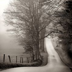Black and white photography, landscape, rural, rustic, road, fog, Appalachia, cades cove, 8 x 8 print