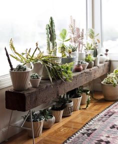 Indoor plant bench. Just what I need in front of the windows in the office - timber and legs.