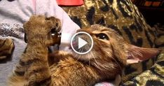 You might want to turn up the volume for this one. This kitty is obviously very hungry but also seems to have a very special sound he makes when he's chowing down. How adorable! Video Source