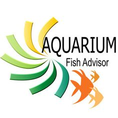 In temperate zones, many of the livebearers seen in home aquariums can be bred in summer in garden pools and ponds. The Mollies are particul...