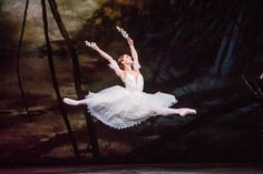 https://flic.kr/p/FEY1Fj   Marianela Nuñez in Giselle © ROH 2016. Photographer Tristam Kenton   Marianela Nuñez as Giselle in Peter Wright's production of Giselle. The Royal Ballet 15/16 Season Photograph by Tristam Kenton   www.roh.org.uk