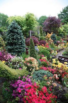 "English Garden for all seasons. ""Upper garden at dusk"" (May ! Winner of Daily Mail , National Gardens Annual Competition ! Garden Show, Dream Garden, Amazing Gardens, Beautiful Gardens, Beautiful Things, Garden Shrubs, Hillside Garden, Beautiful Flowers Garden, Colorful Garden"