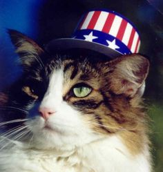137 Best 39 Cats Amp The 4th Of July Along With Other Patriotic Days Images Cats Memorial Day