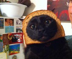 Inbread Cat...get it...in bread...cat?