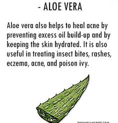 Aloe Vera works amazingly against wounds, skin infections, burns, eczema and skin allergies.  #aloevera #skincare #natural #healing #theindianspot