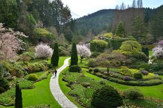 Enveloping you in lush greens and colourful blooms, The Butchart Gardens is a must-see oasis, growing in Victoria, British Columbia for over 100 years. Early Spring, Spring Time, Sunken Garden, Lush Green, Vancouver Island, Historical Sites, British Columbia, Places To Go, Things To Do