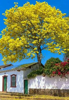 Splendid beautiful photo of a most beautiful yellow tree  by a lovely house.