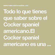 Todo lo que tienes que saber sobre el Cocker spaniel americano.El Cocker spaniel americano es una variante de su versión inglesa.