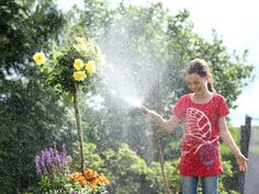 The Federal Environment Ministry recommends rainwater to water your plants