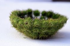 OMG! My Mom used to take us intot he fields/woods to collect these burrs to make baskets. Then she would spray paint them gold.