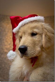 perro gorritos navidad
