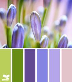 Lavender tones