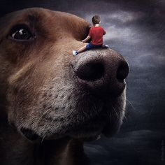 Photographer Uses Photoshop to Help Homeless Animals Find Homes More