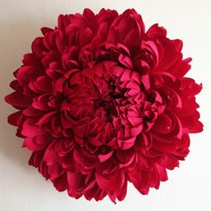 Tiffany Turner giant paper flower:  chrysanthemum