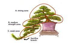 Energy Balancing #2 – Cascade Bonsai 5/31/09