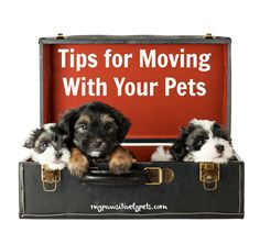 Pawsitively Pets: Tips for Moving With Your Pets and a Giveaway
