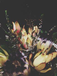 Allanah Marie Photography - follow 'allanahbarley' on Instagram
