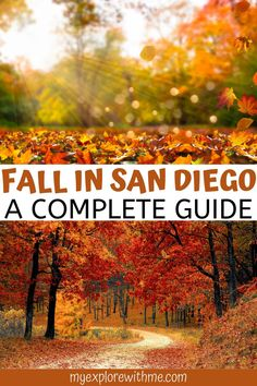 This guide to San Diego in the fall includes the best fall events in San Diego and 10 of the best things to do in San Diego in fall. Get a taste of fall in San Diego with this list of the best fall activities in San Diego California. | best things to do in san diego in the fall | san diego pumpkin patch | pumpkin patches in san diego | san diego things to do in fall | san diego in the fall | san diego fall activities San Diego Events, San Diego Travel, Travel Guides, Travel Tips, Places To Travel, Travel Destinations, Places To Go, Vacations In The Us, United States Travel