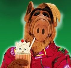 Alf has a snack |Pinned from PinTo for iPad|