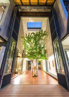 Seven-metre high doors fold open to reveal a courtyard and tree at the centre of this house
