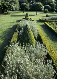 Box hedge parterre at Westbury Court Garden, Wessex. In the foreground are Love-in-the-Mist (Nigella) seedheads.