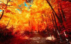 The colors of Autumn - Part VI by myINQI.deviantart.com on @deviantART
