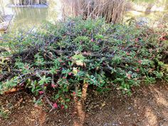 Copyright By Nkahloleng Eric Mohlala Copyright ©️ 2021 By Eric Nkahloleng Mohlala, www.mohlalaads.co.za Crown Of Thorns Plant, Brother From Another Mother, Big Family, East Side, Running Away, Gardening, History, Plants, Historia
