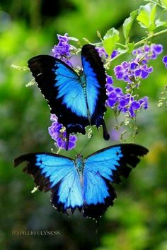 Beautiful Pictures Of Flowers And Butterflies Birds beautiful pictures of flowers and butterflies birds the most… by Most Beautiful Butterfly, Beautiful Flowers Pictures, Flower Pictures, Nature Pictures, Beautiful Birds, Animals Beautiful, Beautiful Images Of Flowers, Nature Images, Butterfly Photos