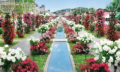 Rose Festival at Huis Ten Bosch 1 Sasebo City & Saikai City Flowers / Theme parks / Festivals and events