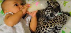 Восьмимесячная девочка и детеныш ягуара вместе пьют молоко из бутылочек - http://pixel.in.ua/archives/15826