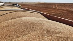 John Honeywell uses a grain drill to plant winter wheat near Orlando, Okla., on Sept. 12, 2012.