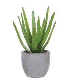 Aloe Rock Pot.  Free Shipping.