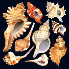 Seashells, I love these!
