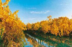 Mendoza, viñedos