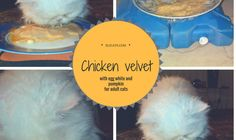 #Chicken velvet with #egg white and #pumpkin for adult #cats | Elicats Homemade Petfood