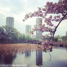 Giappone: fare hanami tra i sakura a Tokyo