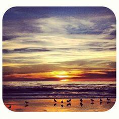 Birds on the beach with a wonderful sky
