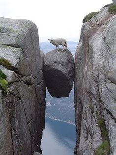 Careful footed mountain goat on suspended boulder