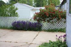 gardening | Forsyth Family Blog / lattice to cover up ugly fence