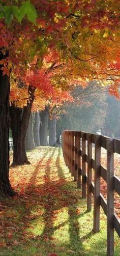 Autumn, my favorite time of the year
