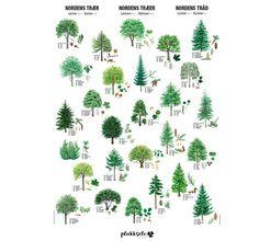Plakat av Nordens trær | Plukkselv.no - nettbutikk for sankeentusiasten