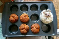 SURELY as a delicious muffin!