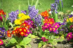 flowers pictures - Bing Images