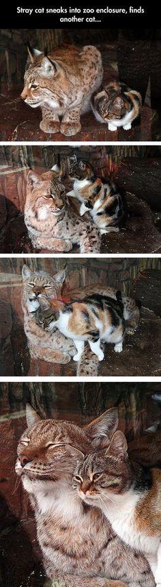 Cat visits his m8 in prison - Imgur
