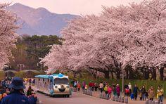 Seoul Grand Park by skagos26