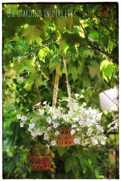 million bells nel portavaso appeso all'uncinetto - un giardino in diretta