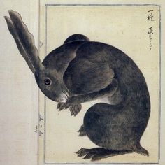 """""""Watership Down"""" again; this time represented by Haruyama Takagi illustration 'Rabbit' (Edo Period). So I just finished reading this for the time, 5 stars. Rabbit Illustration, Illustration Art, Vintage Illustrations, Japanese Prints, Japanese Art, Lapin Art, Year Of The Rabbit, Art Asiatique, Art Japonais"""